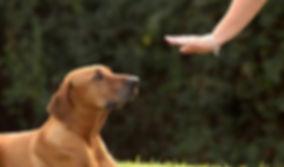 puppy-456565.jpg