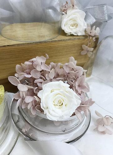 Petals & Rose