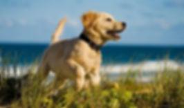 Dog-on-Beach.jpg