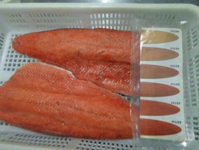 filetes salmon keta