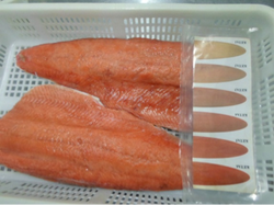 filetes salmon keta