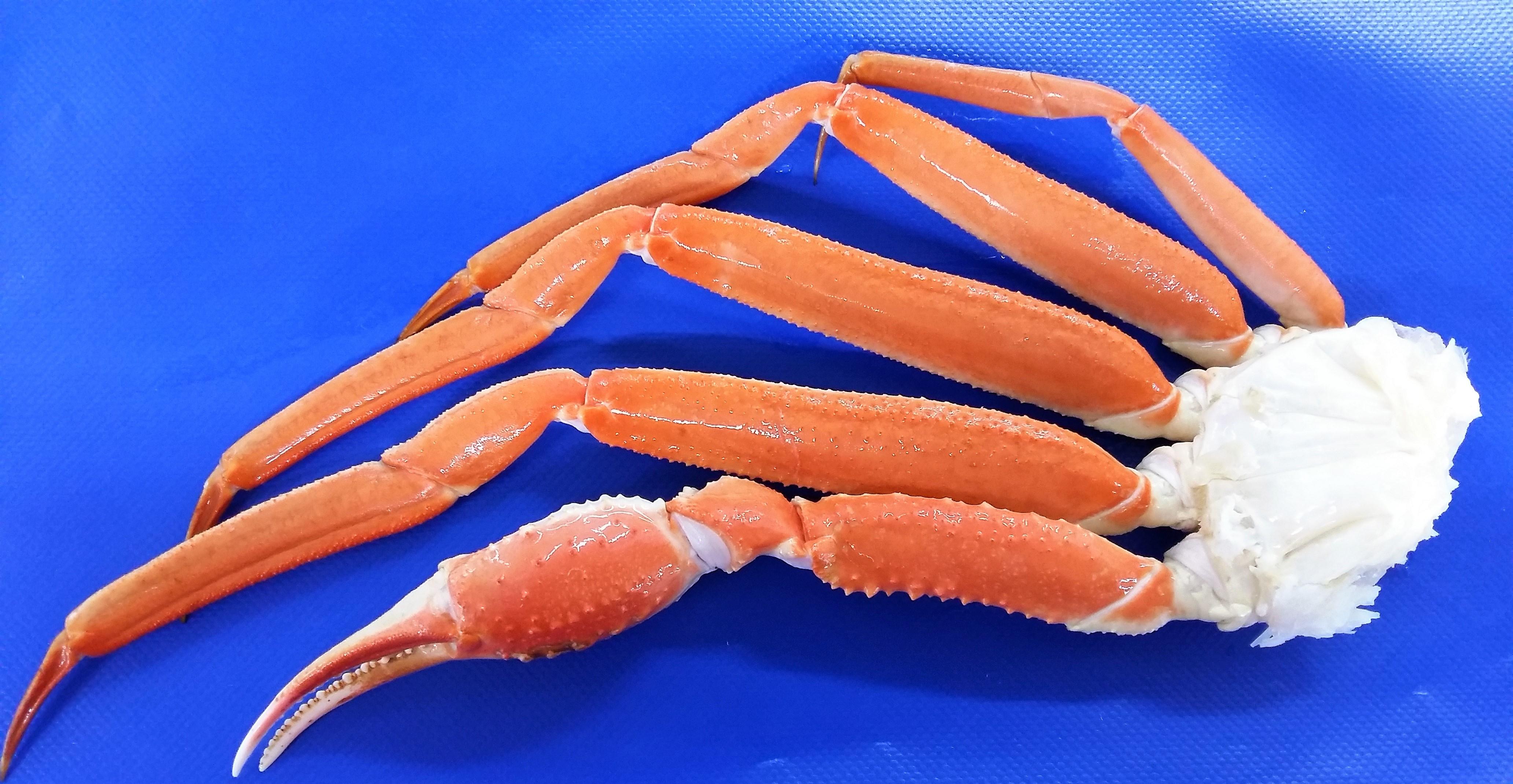 Cuerpos cocidos sin glaseo3