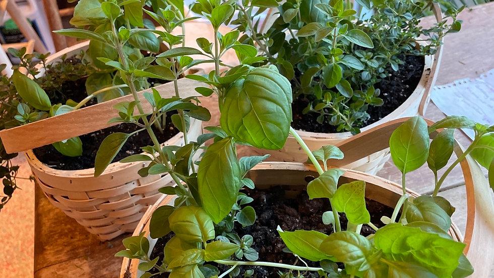 6/12 11am Culinary Herb Garden Mini-Workshop