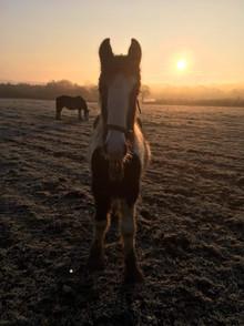 Hitch In Farm Our Equine Alarm Clocks