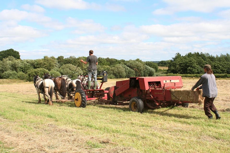 Hitch In Farm Making Hay on Horsepower