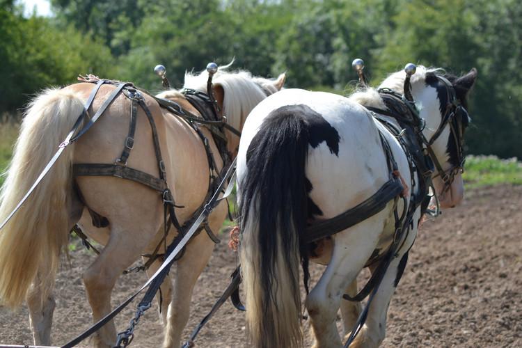 Hitch In Farm Pasture Management