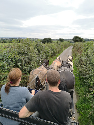 Hitch In Farm Carriage Driving Four In H