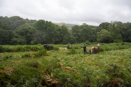 Hitch In Farm Rolling Bracken With Horse