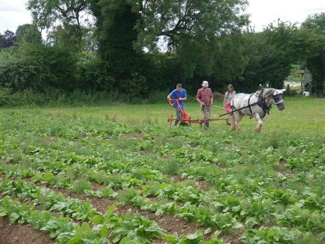 Hitch In Farm Using a Kassine