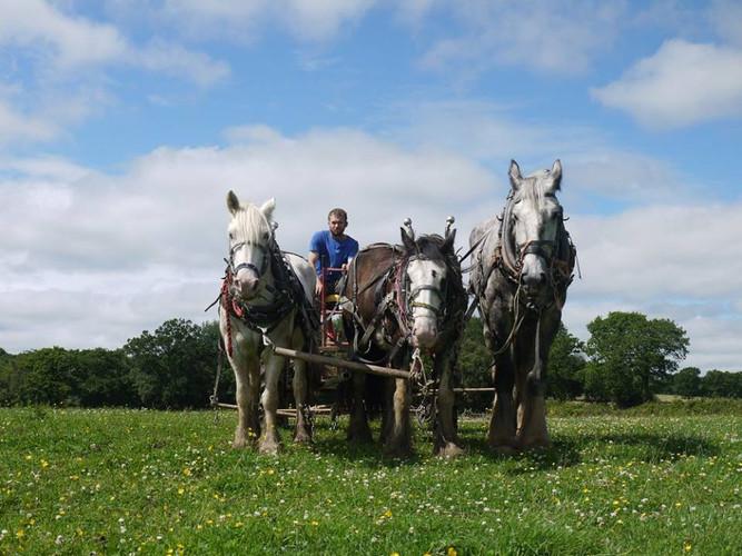 Hitch In Farm Three Abreast
