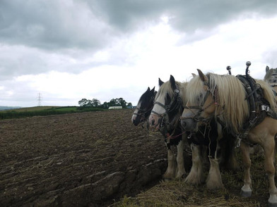 Hitch In Farm Four In Hand Demonstration