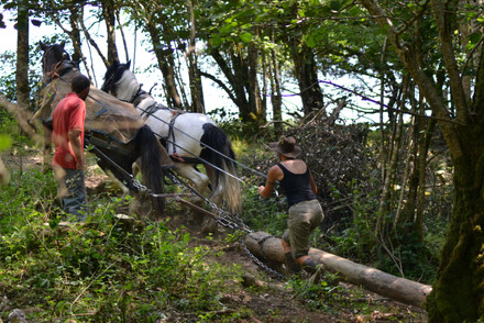 Hitch In Farm Horse Forestry Management
