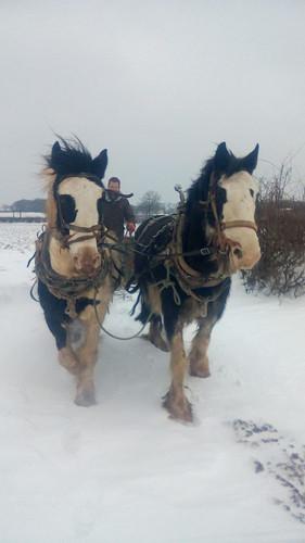 Hitch In Farm Horse-Drawn Sled