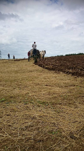 Hitch In Farm Ploughing Our Fields