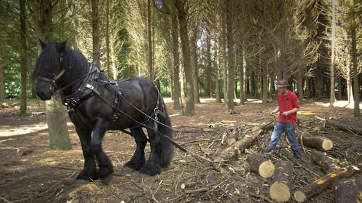 Hitch In Farm Use a Brabant Stallion For