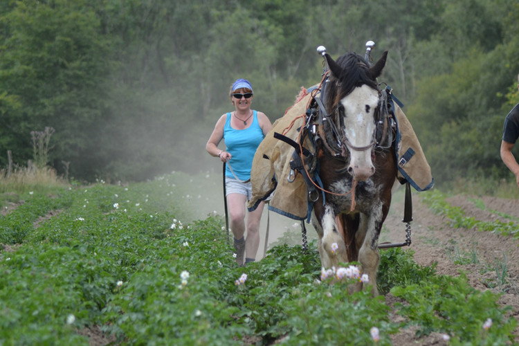 Hitch In Farm Ridging Potatoes in the Ve