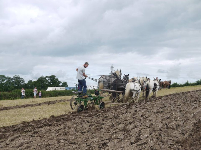 Hitch In Farm Horse Plough Demonstration