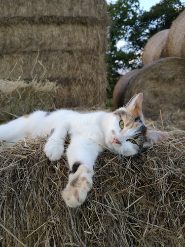 Hitch In Farm Our Cutest Moggie