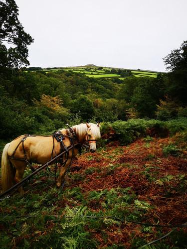 Hitch In Farm Bracken Rolling
