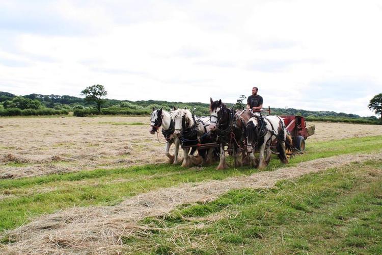 Hitch In Farm Horse-Drawn I&J Hitch Cart