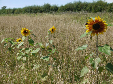 Hitch In Farm Van Gogh's Inspiration
