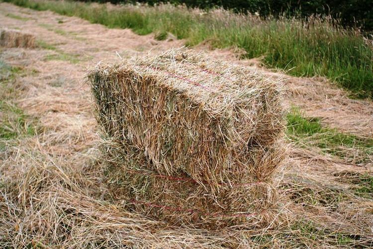 Hitch In Farm Horse-Drawn Hay Bale