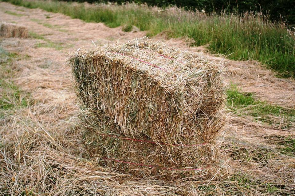 Hitch In Farm Horse-Drawn Hay Bale