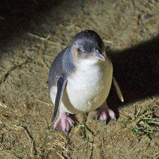 Penguin Island expedition