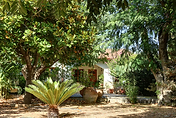 Armeni Garten 2.png