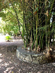 Aoide - Bambusplatz.jpg
