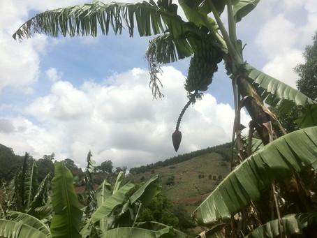 Resilient small-scale coffee farming in La Fundadora