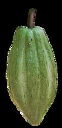 green pod.png