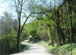 Road to Kyle's Landing