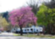 Campground in springtime