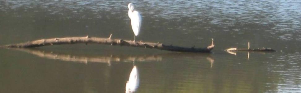 Pan of Heron Fishing