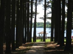 Pines on Cedar Trail