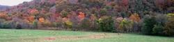 Elk Herd at Boxley, AR