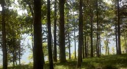 Lake at Daisy State Park