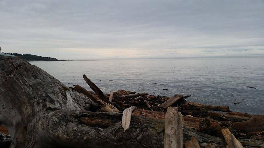 DriftwoodBeach