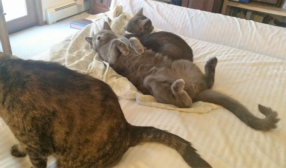 From left, Liesl, Jesse, and JoJo. I'd like to be a cat like Jesse!