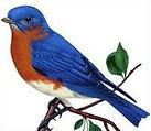 BluebirdClip2.jpg