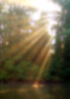 AS100715037Sunlight.jpg
