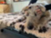 massage-canin-53.jpg