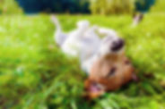 bien-etre-chien-mayenne-53.jpg