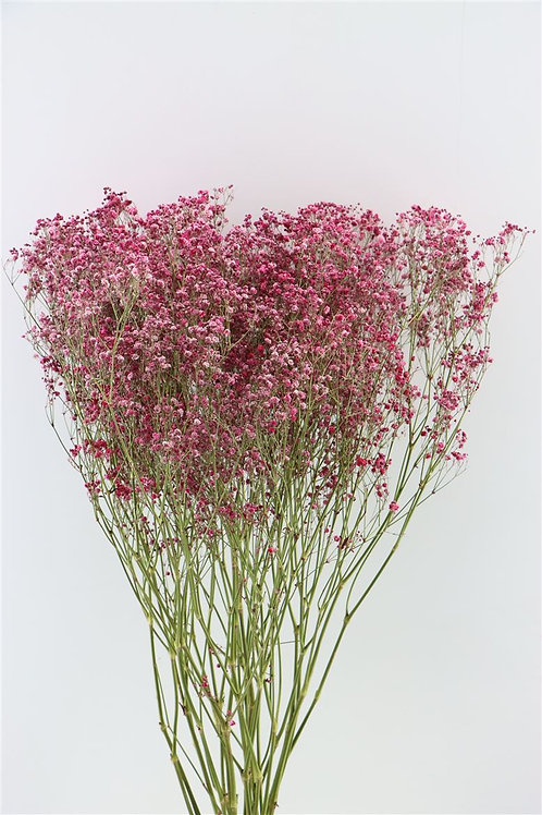 Dried Gypsophelia - Pink