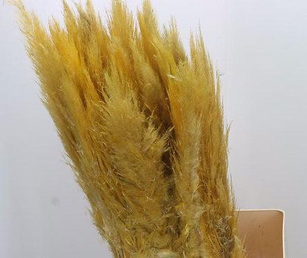 Pampas Grass - Yellow