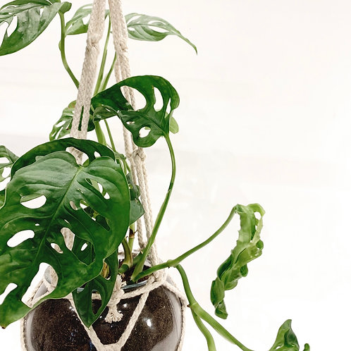 Plant Hanger with Glass Bowl