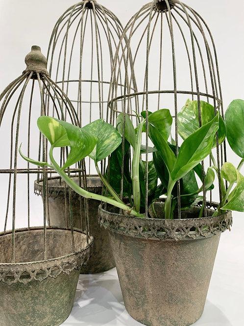 Plant Pot & Cloche