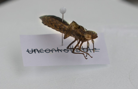 insect skin