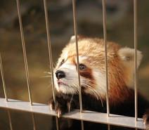 ¿Sabías que Costa Rica será el primer país del mundo en cerrar zoológicos y liberar sus animales?